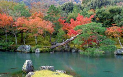 Hanami, i fiori dell'estremo oriente